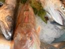 Pesce di Paranza